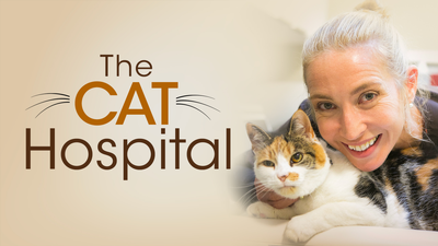 Cat Hospital - Documentary category image