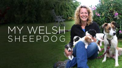 My Welsh Sheepdog - Soothing Documentary Series category image